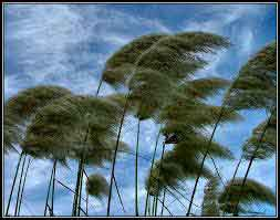 giorni-di-vento