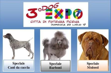 3° dog expo p.picena