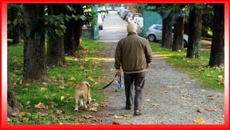 a passeggio con il cane 1