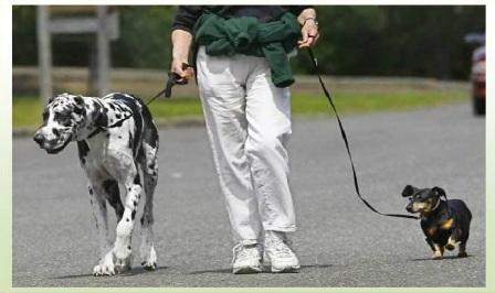 a spasso con i cani