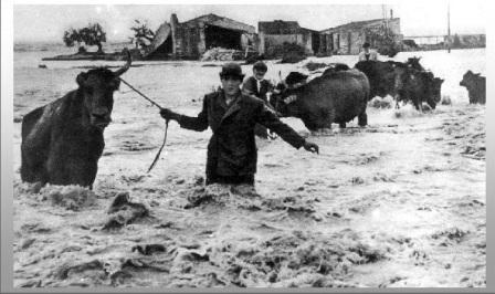 alluvione polesine 1951
