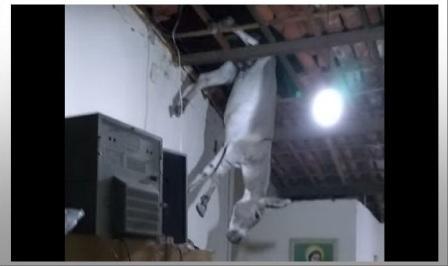 asino-entra dal tetto-screenshot da youtube