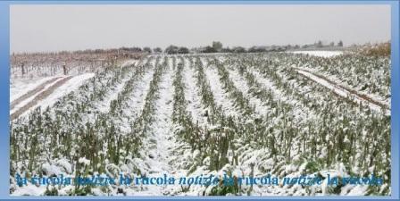 campi di ghiaccio