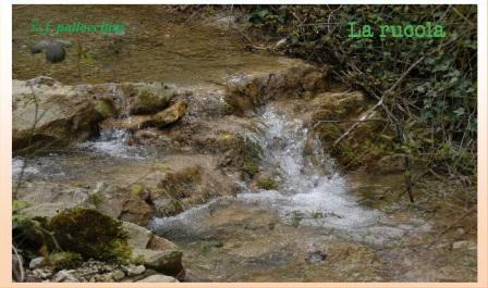 cascatelle nei pressi dell'abazia di sant'eustachio ph f.pallocchini