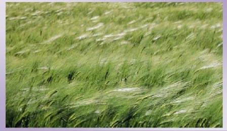 erba mossa dal vento