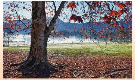 foglie cadono