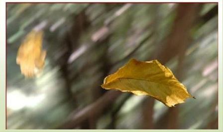la foglia e il vento