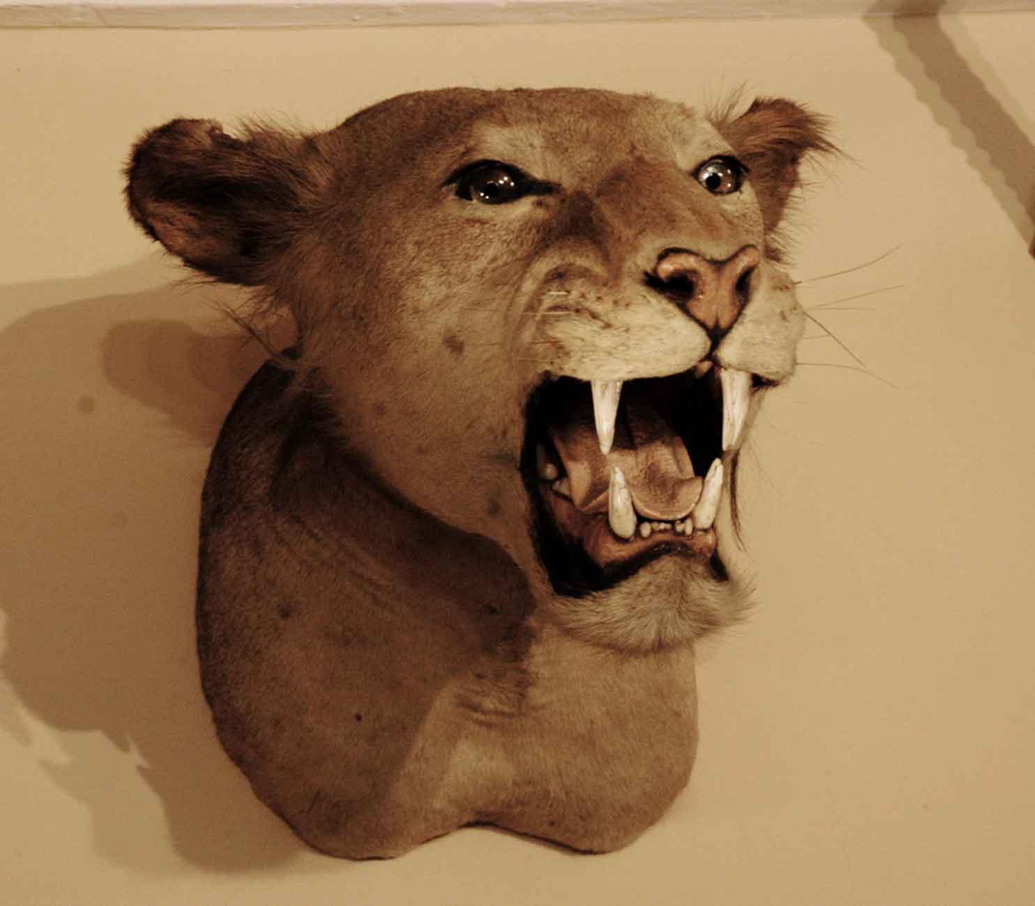 leone-museo-storia-naturale