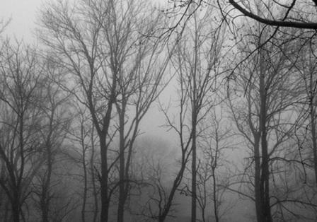 nebbia in campagna