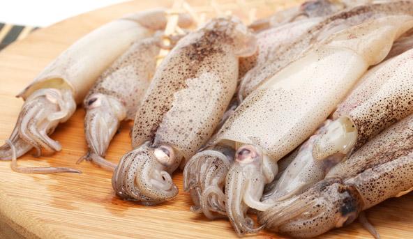 p 16 calamari