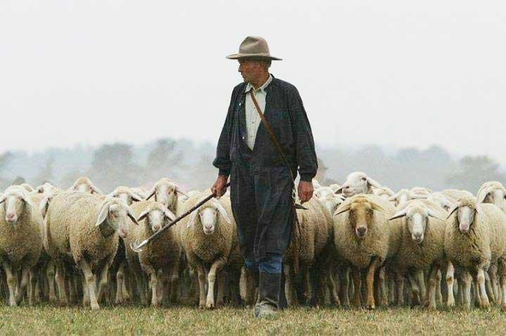 p-17-Pastore-e-pecore