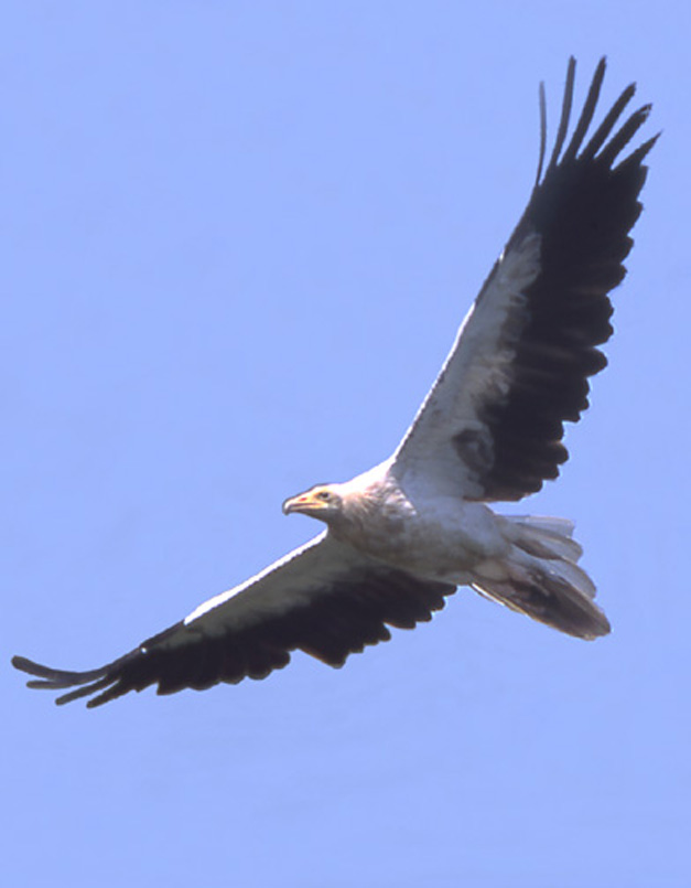 p-22-avvoltoi-sull'europa