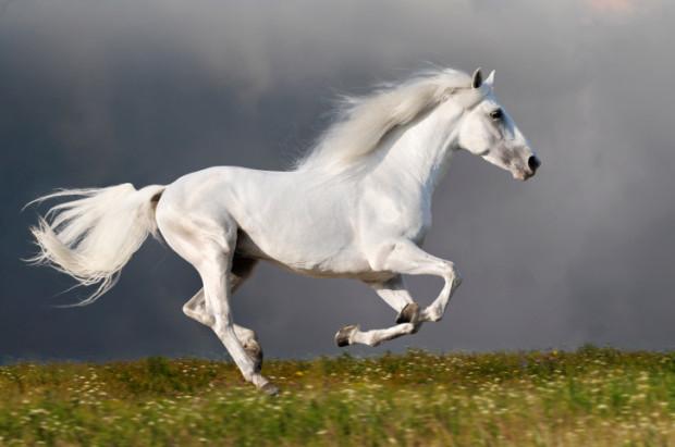 p 22 il cavallo