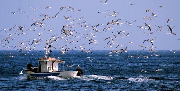 p 22 pescatori di frodo