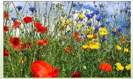 prato-di-fiori-selvatici