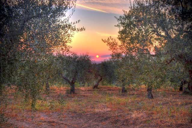 tramonto-nell-uliveto